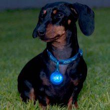 hondenpenning-veiligheidslampje-hond-hetdier-nl